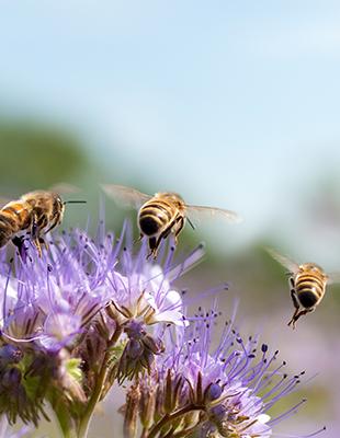 Natuurpunt en Arcadis werken samen aan biodiversiteitsherstel in Vlaanderen