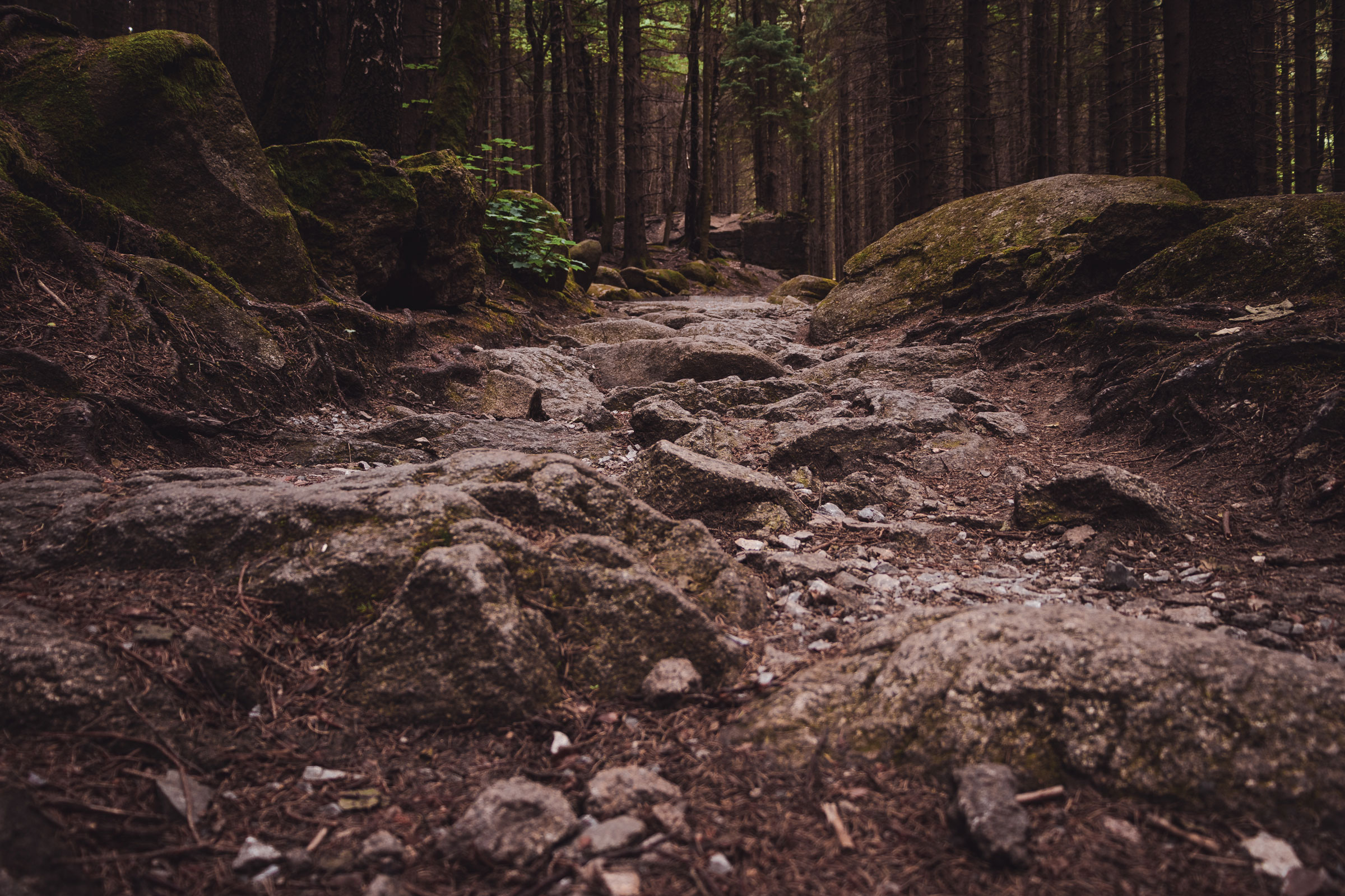 Steiniger Waldboden