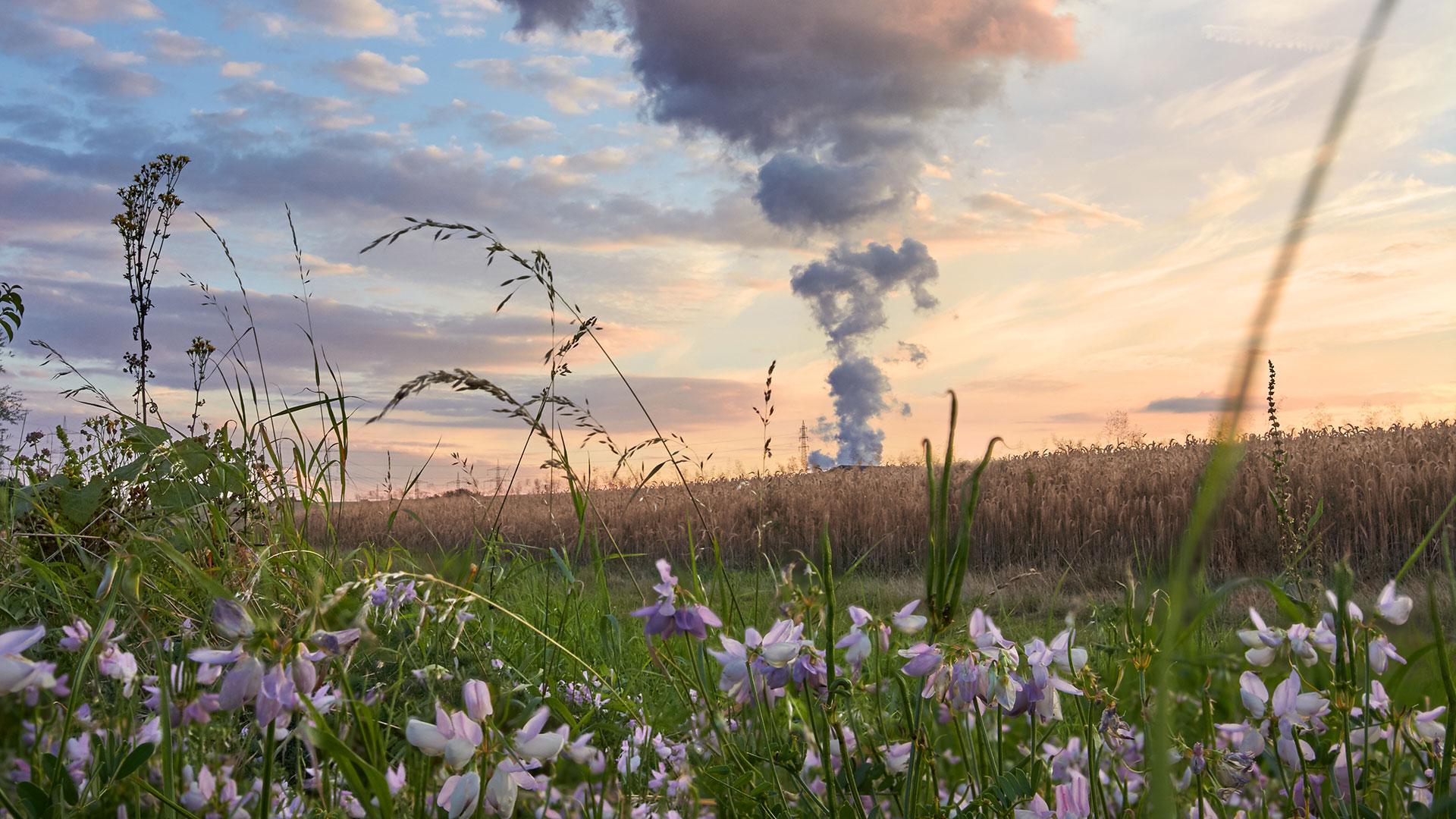 Felder und Wiesen mit Rauchwolken aus einer Fabrik im Hintergrund